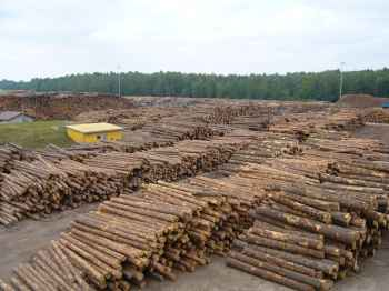The largest sawmill in Estonia